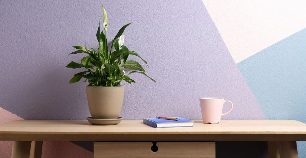 peace-lily-feng-shui-plant