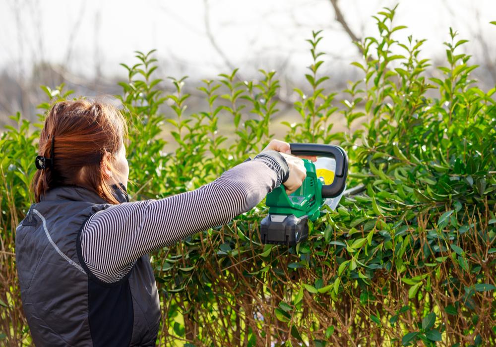 trimming-bushes