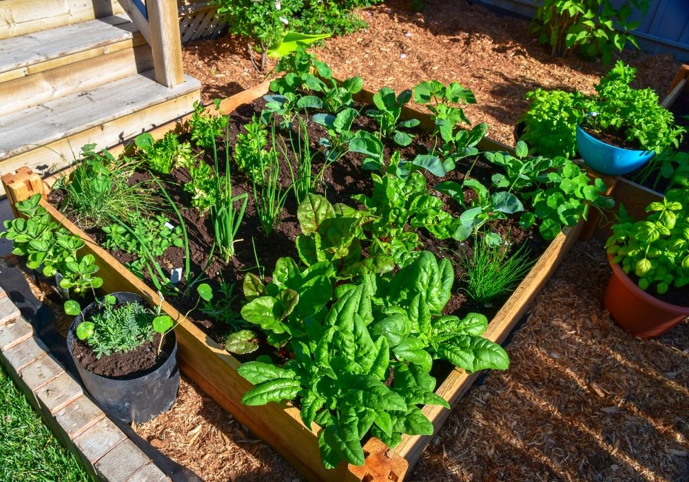 vegetable-herb-garden-raised-bed