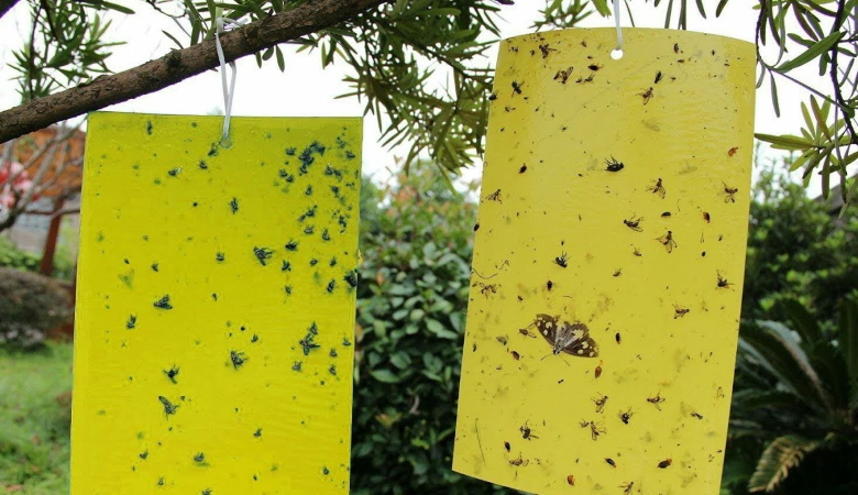 DIY Sticky Paper Fly Traps