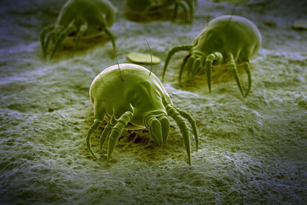 Dust Mite Bites Treatment
