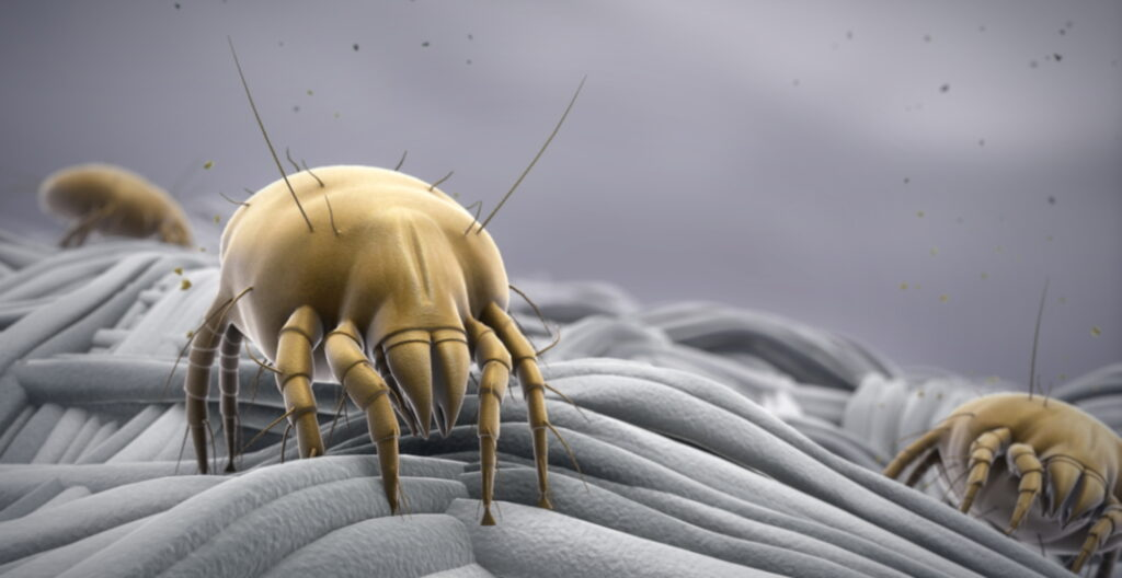 Get Rid Of Dust Mites Naturally?