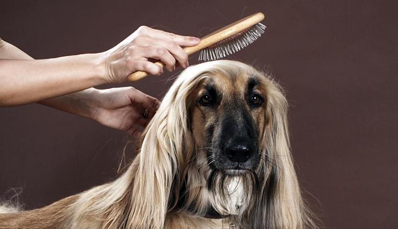 Person Brushing Dog